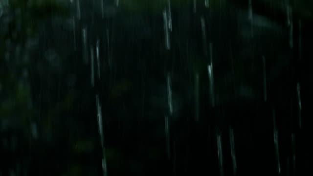 vídeos de stock, filmes e b-roll de heavy rain in tropical cloud forest/kakamega, kenya - chuva torrencial