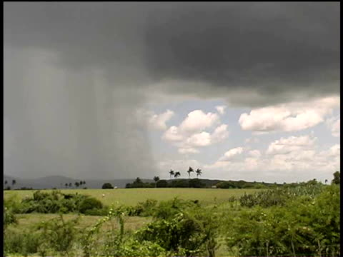 ws, heavy rain on countryside, cuba  - palma nana video stock e b–roll