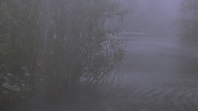 heavy rain pours down in the swamp. - monsoon stock videos and b-roll footage
