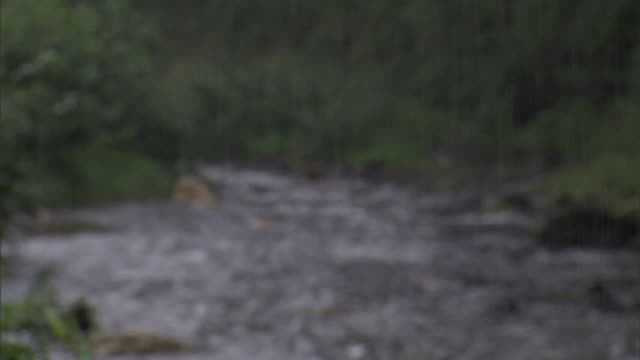 heavy rain pours down on a small river. - cornwall england stock videos & royalty-free footage