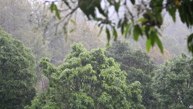 heavy rain - bamboo plant stock videos & royalty-free footage