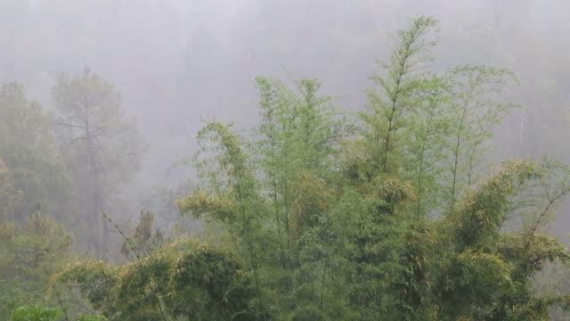 heavy rain - tall high stock videos & royalty-free footage