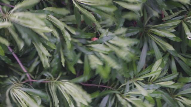 vídeos y material grabado en eventos de stock de lluvia fuerte con viento - menos de diez segundos