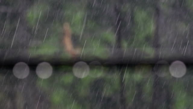 heavy rainfall - monsoon stock videos and b-roll footage