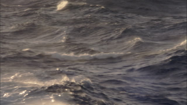 heavy seas with large waves - drake passage stock videos and b-roll footage