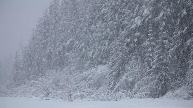heavy snow falling, chugach national forest, alaska. - chugach national forest stock videos & royalty-free footage