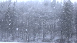 CLOSE UP: Heavy snow falling from the sky on tall trees and snowy plains