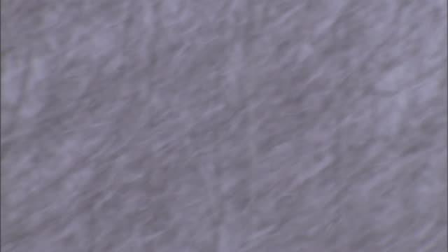 vidéos et rushes de heavy snow falls in a forest. - blizzard