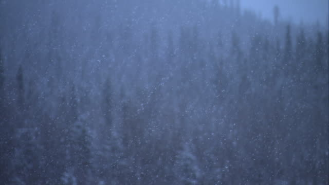 heavy snow falls on an evergreen forest. - snowing stock videos & royalty-free footage