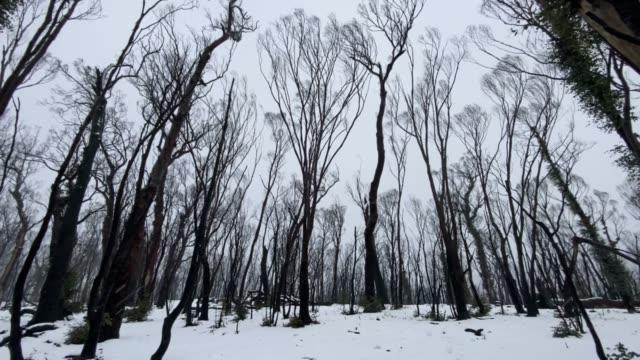 heavy snow falls on bushfire damaged country inside the kosciuszko national park near adaminaby on august 21, 2020 in adaminaby, australia. the... - australian alps stock videos & royalty-free footage