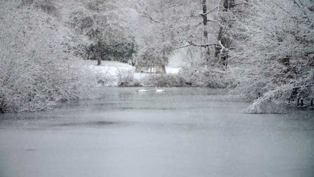 heavy snowfall in slow motion with two swans - mute swan stock videos & royalty-free footage
