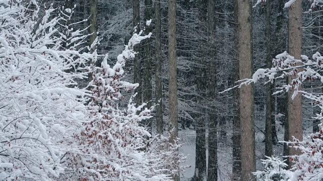 vidéos et rushes de heavy snowfall in the forest - cristaux