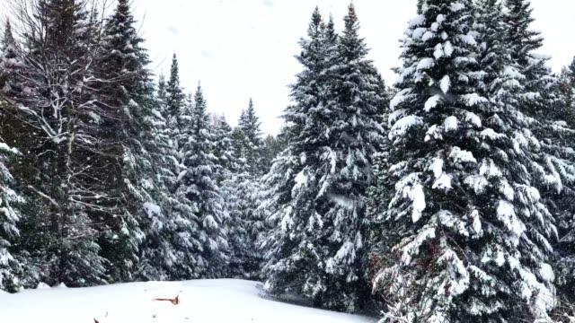 Heavy Snowfall in Vermont