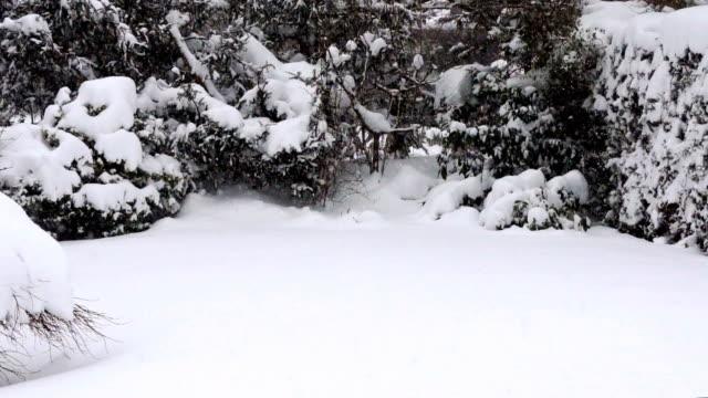 vídeos de stock, filmes e b-roll de heavy snowfall - snow cornice