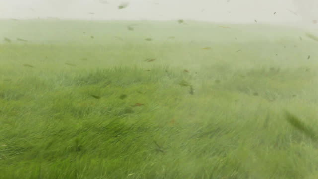 stockvideo's en b-roll-footage met heavy storm and rain over rice paddy. - zwaar