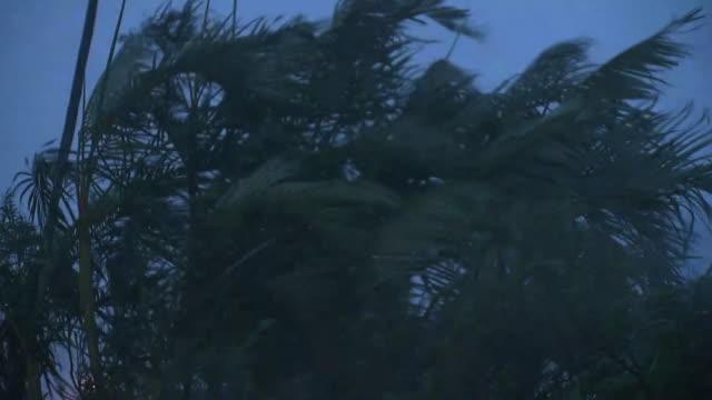 heavy storm by typhoon, okinawa, japan - 集中豪雨点の映像素材/bロール