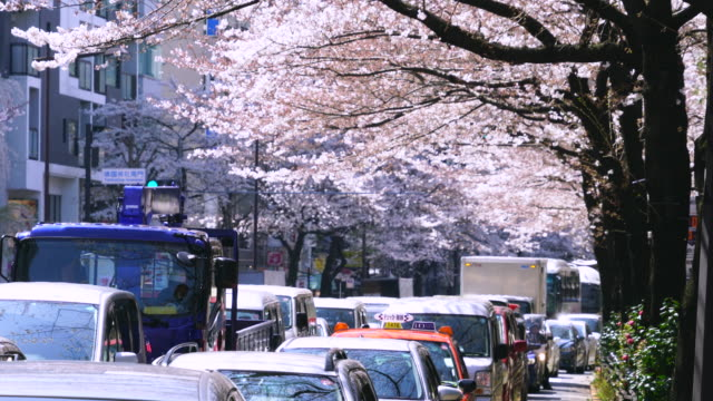 heavy traffic under the cherry blossoms tree line at yasukuni doori. can be seen the yasukuni shrine at right side of street. - treelined stock videos & royalty-free footage