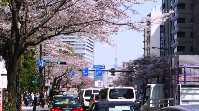 Heavy traffic under the Cherry blossoms tree line at Yasukuni Doori. Tokyo Sky Tree can be seen behind among the buildings.