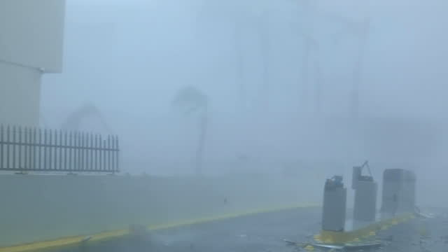 heavy wind and rain and debris during hurricane maria in san juan, puerto rico - palm tree stock videos & royalty-free footage
