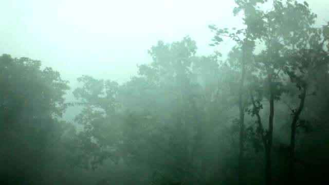 heavy wind and rain - tree stock videos & royalty-free footage