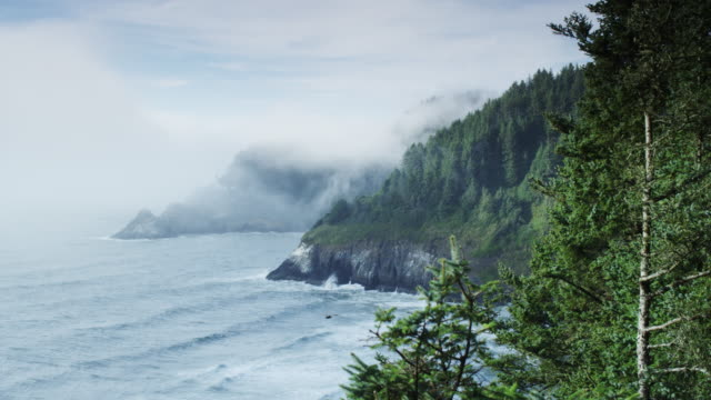 heceta lighthouse in the fog wide shot - heceta head stock videos & royalty-free footage