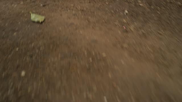 hectic hand-held camera scrambles running along a dirt path in a jungle. - macchina da presa manuale video stock e b–roll