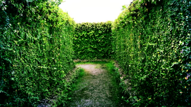 hedge maze - maze stock videos & royalty-free footage