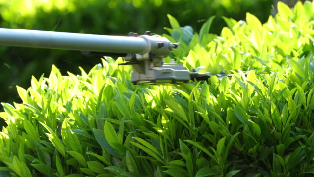 vídeos de stock e filmes b-roll de hedge trimmer - divisa