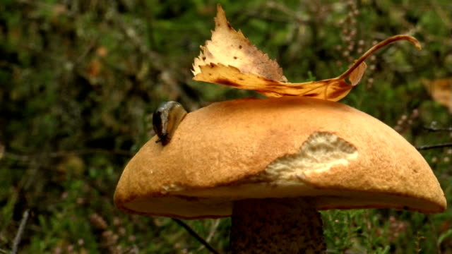 hedgehog near mushroom - hedgehog stock videos & royalty-free footage