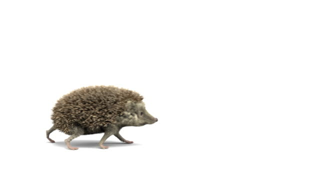 hedgehog running left to right and right to left - loopable - hedgehog stock videos & royalty-free footage