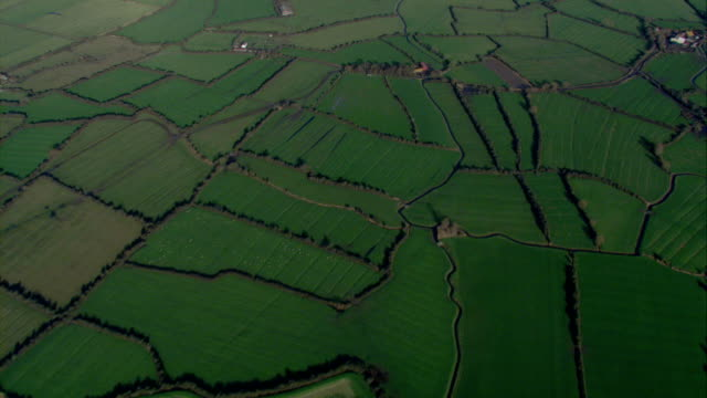 Hedges divide lush farm fields. Available in HD.