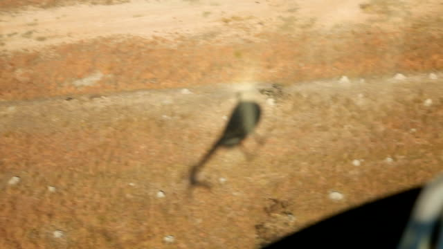 Helicopter shadow in the ground in the bushveld Rhino poaching is a major threat to the extinction of rhinos living in and around nature reserves in...