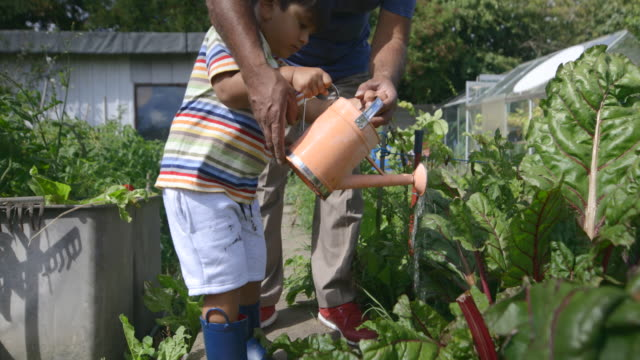 helping grandad water the plants - watering can stock videos & royalty-free footage