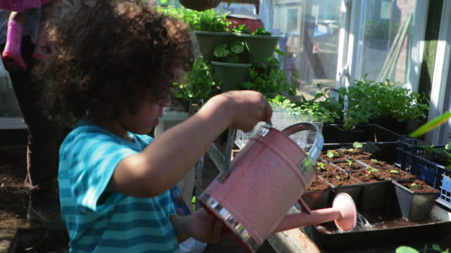 helping grandfather water the greenhouse - community garden stock videos & royalty-free footage