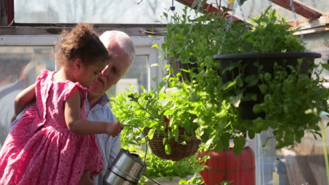 helping grandfather water the plants - vegetable garden stock videos and b-roll footage