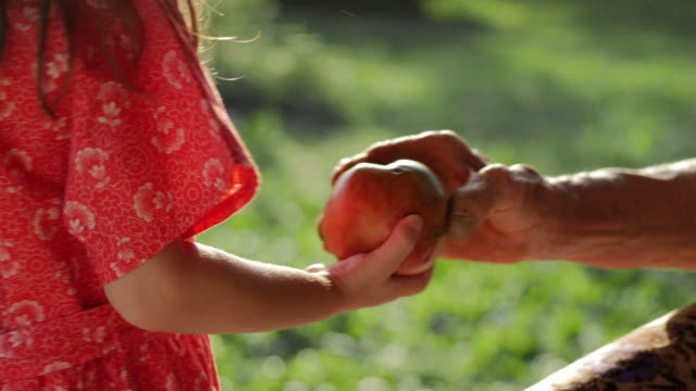 A Helping Hand-Little Girl Share an Apple  with Grandmother. Detail of a Child Hands and Senior Woman Hands.