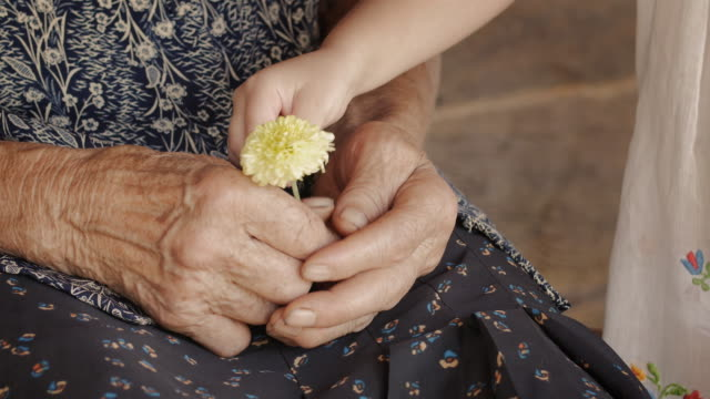 A Helping Hand-Little Girl Share Flower with Grandmother. Detail of a Child Hands and Senior Woman Hands.