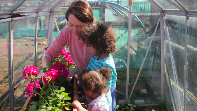 helping mother plant in the greenhouse - community garden stock videos & royalty-free footage