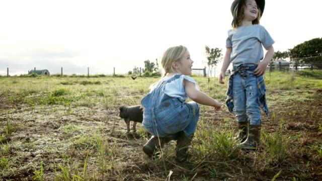 att hjälpa till runt gården - gris bildbanksvideor och videomaterial från bakom kulisserna