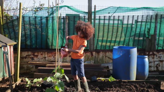 vidéos et rushes de aider à arroser les plantes à l'allotissement - jardin potager