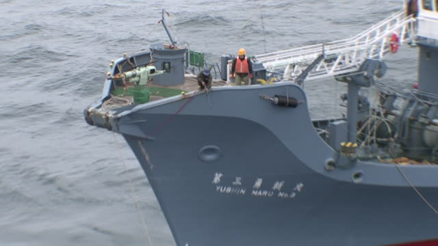 a helpless and bloody whale flops next to the prow of a whaling ship. - valfångst bildbanksvideor och videomaterial från bakom kulisserna