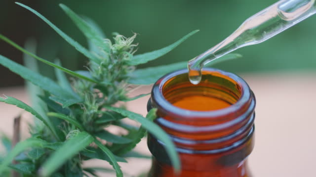 cbd hemp oil in a droplet with buds - herb stock videos & royalty-free footage