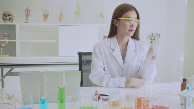hemp oil research in laboratory. - marijuana herbal cannabis stock videos & royalty-free footage