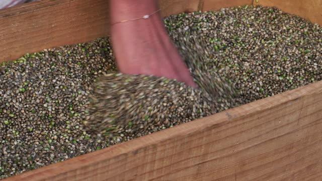 vidéos et rushes de diapositive de graines de chanvre sur main - graine