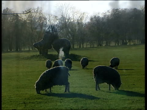 hertfordshire much haddam along country lane and past houses in village henry moore sculpture in field with sheep grazing around i/c tim llewellyn... - grazing stock videos & royalty-free footage