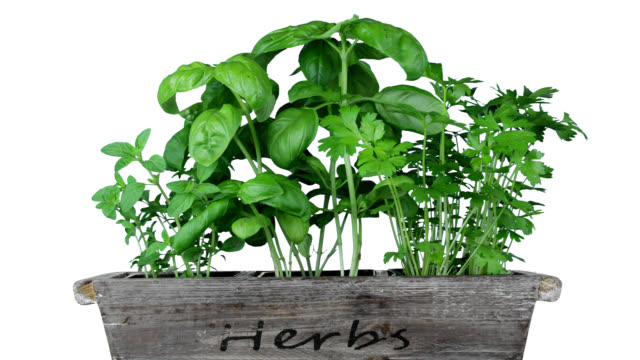 herb garden - basil stock videos & royalty-free footage