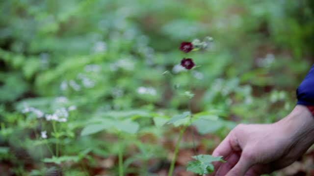 vidéos et rushes de récolte herbes dans la campagne-montage - cueillir