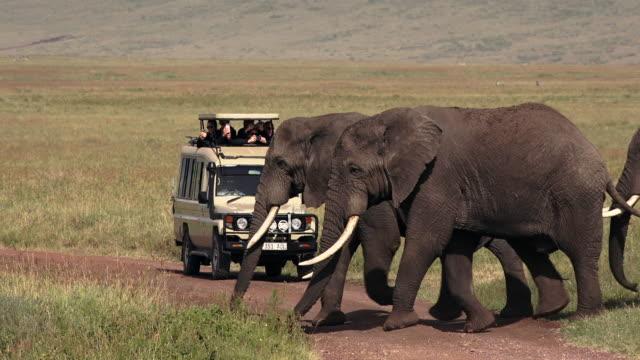 herbivores of ngorongoro crater, tanzania - tanzania stock videos & royalty-free footage