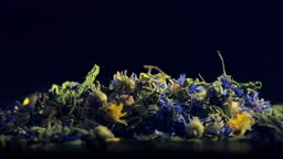 Herbs tea of lemon balm, cornflower, nettle and marigold