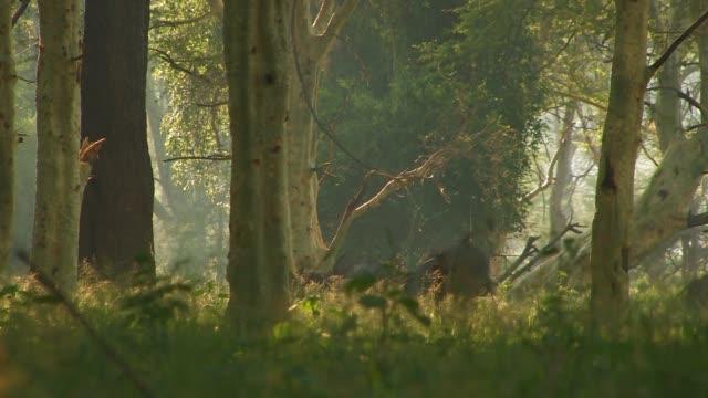 vídeos y material grabado en eventos de stock de a herd of african buffalo runs through a forest. available in hd. - zoología